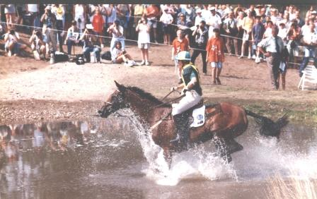 Navarone World Equestrian Games The Hague 1994